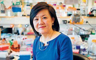 Η διάσημη νευροεπιστήμων του ΜΙΤ Λι Χουέι Τσάι.