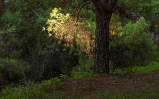 Η φωτογραφική έκθεση της Ν. Κυριαζή εγκαινιάζεται σήμερα στην a.antonopoulou.art.
