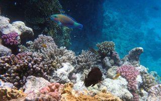 o-protos-koralliogenis-yfalos-sti-mesogeio-entopistike-stin-italia0