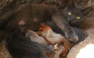 Θηλάζοντας σκιουράκια. Η Pusha είναι μάνα και δεν ταϊζει μόνο το δικό της μωρό αλλά και τέσσερα σκιουράκια στο Bakhchisaray της Κριμαίας. REUTERS/Alexey Pavlishak