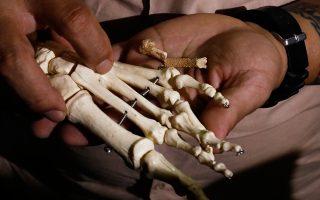 Ο Φιλιππινέζος αρχαιολόγος δρ Αρμάντ Μιτζάρες κρατάει μικρά απολιθωμένα οστά του Homo luzonensis δίπλα σε ένα σκελετικό δείγμα.