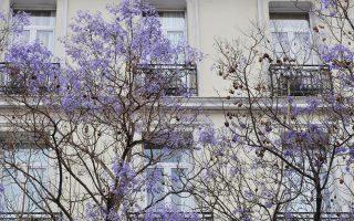 Περίπου 90.000 δένδρα βρίσκο-νται στα πεζοδρόμια της Αθήνας.