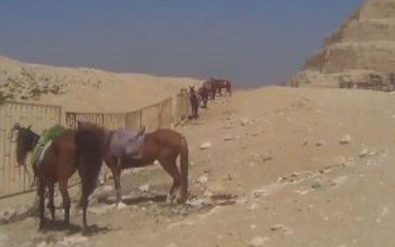 Αίγυπτος: Κακοποίηση ζώων για «τουριστικούς» σκοπούς καταγγέλλει διεθνής φιλοζωϊκή οργάνωση