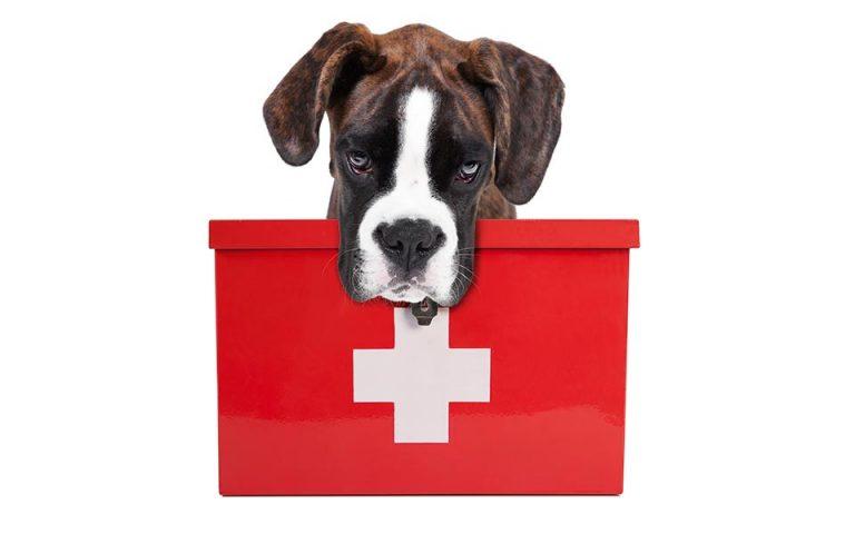 Πρώτες βοήθειες για ζώα και ανθρώπους