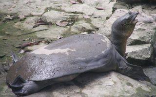 Φωτογραφία από το turtlesurvival.org