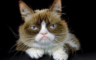 Γκρίνια. Η στριμμένη μουσούδα της είχε κάνει αίσθηση στο ίντερνετ. Οι ιδιοκτήτες της κάθε λίγο την φωτογράφιζαν και ανέβαζαν τις φωτογραφίες της στα μέσα κοινωνικής δικτύωσης  ως Grumpy Cat. H γατούλα έφυγε από την ζωή στην ηλικία των 7 μόλις ετών από μόλυνση στο ουροποιητικό σύστημα.(AP Photo/Richard Vogel, File)
