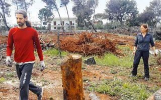 Το Project Phoenix είναι πρωτοβουλία της Ελληνογαλλίδας Βαλερί Βασιλικού, κατοίκου Ραφήνας και ειδικού στην οικολογική δόμηση, η οποία θεωρεί ότι ύστερα από μια τόσο μεγάλη καταστροφή δεν υπάρχει χρόνος για χάσιμο.