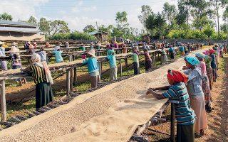Η Nestlé, ο μεγαλύτερος αγοραστής καφέ σε διεθνή κλίμακα, επενδύει περί τα 67 εκατομμύρια δολάρια ετησίως σε προγράμματα στήριξης των αγροτών, καθώς αναγνωρίζει ότι το επίπεδο των τιμών δεν εξασφαλίζει τη διαβίωση των καλλιεργητών.
