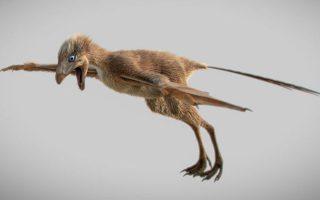 Δεινόσαυρος-νυχτερίδα Αμποπτέρυξ - Πηγή: Min Wang-Chinese Academy of Sciences