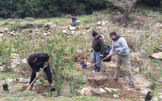 Πριν από λίγους μήνες ξεκίνησε η πρώτη φάση της αναδημιουργίας του δάσους σκλήθρων στη Βόρη με τη φύτευση 3.000 φυταρίων.