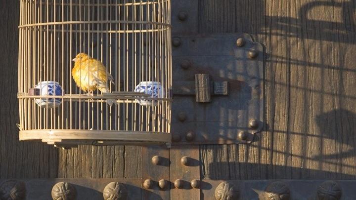 Ρώσοι επιστήμονες ανακάλυψαν το… μυστικό των ωδικών πτηνών