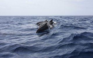 delfinia-ston-korinthiako-vinteo0