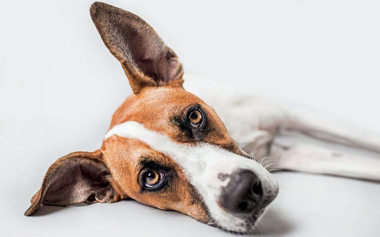 Ένα σκυλί που το έλεγαν Γουάντα