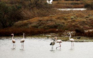 Εθνικό πάρκο Δέλτα Αξιού. Το υπ. Περιβάλλοντος εκτιμά ότι θα κλείσει εγκαίρως κάποιες εκκρεμότητες για να αποφύγει επιπλέον καθυστέρηση που συνεπάγεται την επιβολή προστίμου από την Κομισιόν.