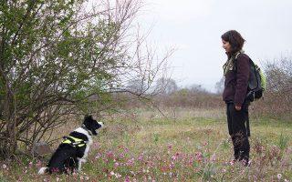 Ειδικά εκπαιδευμένος σκύλος της Ελληνικής Ορνιθολογικής Εταιρείας εντόπισε νεκρό το ένα από τα σκυλιά.