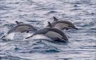 protofanis-ayxisi-delfinion-sto-thalassio-parko-alonnisoy0
