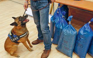 O ειδικά εκπαιδευμένος σκύλος Ντιάμπλο στέκεται δίπλα σε σάκους γεμάτους δισκία Captagon κατά τη χθεσινή συνέντευξη Τύπου, στο ΣΔΟΕ.