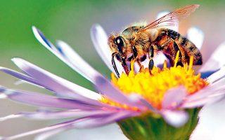 Στο δυστοπικό μέλλον του μυθιστορήματος οι μέλισσες έχουν εξαφανιστεί και οι άνθρωποι γονιμοποιούν χειρωνακτικά τα φυτά σε τυραννικές συνθήκες εργασίας.