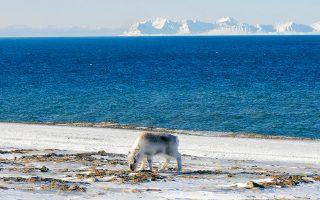 sto-moyseio-toy-arktikoy-archipelagoys-2329977