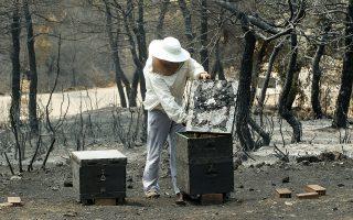 Καμένα μελίσσια από τη μεγάλη πυρκαγιά στην Εύβοια.