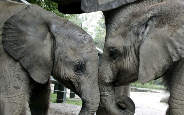 Ελέφαντες κατά κλιματικής αλλαγής