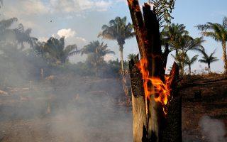 «Καμπανάκι» για το δάσος του Αμαζονίου χτυπάει η διαστημική υπηρεσία της Βραζιλίας, αλλά ο πρόεδρος αδιαφορεί για τα επιστημονικά στοιχεία.