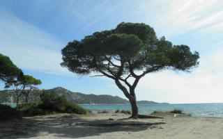 Φωτογραφία από ιστοσελίδα Φορέα Διαχείρισης Εθνικού Πάρκου Σχινιά - Μαραθώνα (npschiniasmarathon.gr)