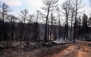 «Είναι ανάγκη, με κατάλληλες μελέτες, να προχωρήσουμε σε αναδασωτικά προγράμματα. Το δάσος είναι η καλύτερη απάντηση στην κλιματική αλλαγή», τονίζει ο δασολόγος Νίκος Μπόκαρης. ΙΝΤΙΜΕ NEWS