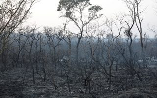 A view shows the burned forest in Taperas, an area where wildfires have destroyed hectares of forest near Robore, Bolivia, August 22, 2019. REUTERS/David Mercado