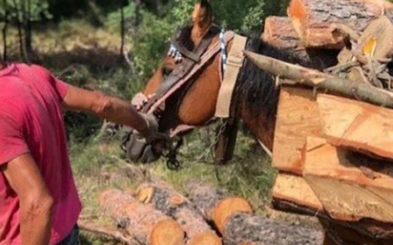 Σε καλή κατάσταση τα άλογα των υλοτόμων στο Σέιχ Σου