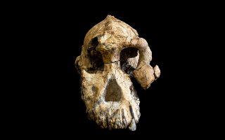 Το απολιθωμένο κρανίο ενός Australopithecus anamensis, που βρέθηκε στην Αιθιοπία, μπορεί να ξαναγράψει την ιστορία της ανθρώπινης εξέλιξης.