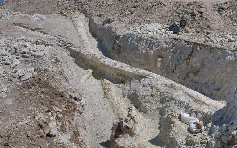 Δυο γιγάντιοι κορμοί απολιθωμένων δένδρων ανακαλύφθηκαν στο Σιγρί Λέσβου (φωτογραφίες)