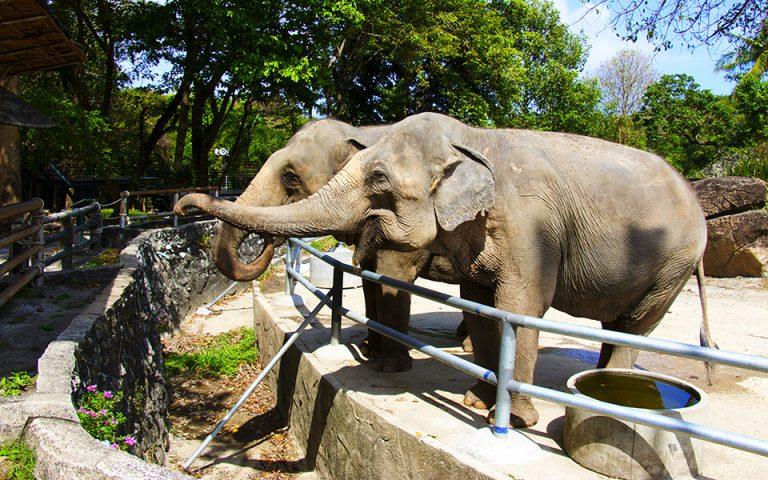 Διεθνής απαγόρευση για την πώληση άγριων ελεφάντων σε ζωολογικούς κήπους