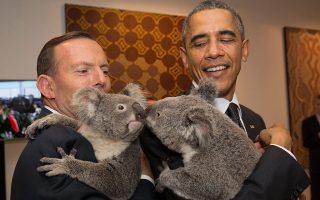 Στη διάσκεψη του G20 το 2014, στο Μπρίσμπεϊν, ο Αυστραλός πρωθυπουργός Τόνι Αμποτ και ο Αμερικανός πρόεδρος Μπαράκ Ομπάμα χαμογελούν με δύο κοάλα στην αγκαλιά τους.