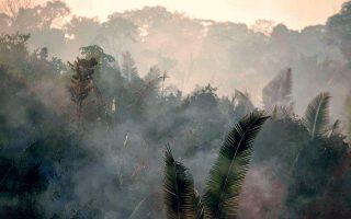 amazonios-epta-chores-tis-amazonias-ypegrapsan-symfono-gia-tin-prostasia-toy-tropikoy-dasoys0