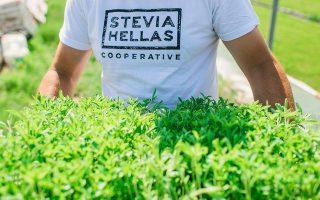 i-elliniki-stevia-apo-ti-gi-sto-rafi0