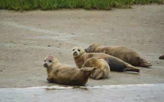 Πηγή φωτογραφίας: Zoological Society of London