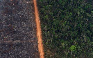 Μια λωρίδα γης χωρίζει την καταστροφή από τη ζωή στην Αμαζονία. Το μυθιστόρημα της Αννυ Πρου αφορά τη διάψευση της βεβαιότητας που είχε η ανθρωπότητα επί αιώνες ότι τα παρθένα δάση θα ζούσαν για πάντα.