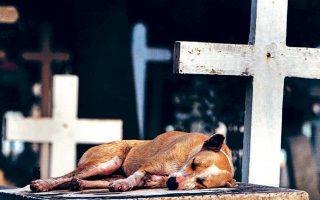 Ενας σκύλος κοιμάται επάνω σε τάφο. Αναπάντητη παραμένει η φύση της θανατηφόρας νόσου.