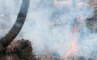 Καμένους κορμούς άφησε πίσω της η καταστροφική πυρκαγιά στον εθνικό δρυμό Κοκονίνο, έξω από το Φλάγκσταφ της Αριζόνας, στις 25 Ιουλίου 2019.