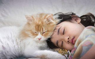 Γάτα κοιμάται ακουμπισμένη στο κεφάλι μικρού κοριτσιού. Οι περισσότερες γάτες προτιμούν να αλληλεπιδράσουν με ανθρώπους παρά να φάνε ή να παίξουν με παιχνίδια, λένε οι ερευνητές. SHUTTERSTOCK