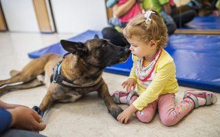 Η πρωταθλήτρια. Η Zen, είναι ένας εξάχρονος σκύλος εργασίας. Το μαλινουά εκτός από την δουλειά της που είναι σκύλος εύρεσης ανθρώπων μετά από καταστροφές, τίτλος που απέκτησε πρόσφατα στο 25 Παγκόσμιο πρωτάθλημα στο Villejust, της Γαλλίας, προσφέρει και εθελοντική εργασία σε παιδιά με ιδιαίτερες δεξιότητες, όπως στο εικονιζόμενο νηπιαγωγείο στην Βουδαπέστη.  EPA/Marton Monus