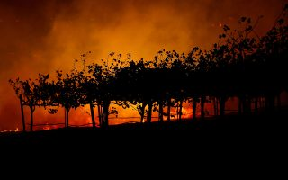 FILE PHOTO: Vines are silhouetted against the Kincade fire burning in a valley below, near Geyserville, California, U.S., October 24, 2019. REUTERS/Stephen Lam/File Photo