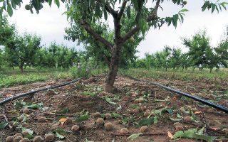 Διαφορετικό τοπίο στην αποζημίωση αγροτών για ζημιές στις καλλιέργειες από φυσικές καταστροφές ή άλλους παράγοντες πρόκειται να διαμορφωθεί, εφόσον υλοποιηθεί ο σχεδιασμός για εμπλοκή ιδιωτών στις ασφαλίσεις.