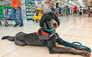 Τα σκυλάκια αποτελούν διασταύρωση Αγίου Βερνάρδου με μεγαλόσωμο κανίς, φυλή που, σύμφωνα με τον εκπαιδευτή και ιδιοκτήτη του κέντρου εκπαίδευσης Friends for Life, Τάκη Πετρόπουλο, συγκεντρώνει όλα εκείνα τα χαρακτηριστικά που είναι απαραίτητα στο έργο τους.