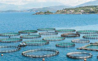 Το νέο σχήμα που θα δημιουργηθεί εκτιμάται πως θα ελέγχει παραγωγή περίπου 70.000 τόνων ψαριών, ποσότητα που αντιστοιχεί στο 37% της παραγωγής της Ε.Ε.
