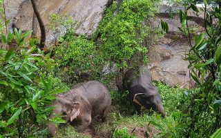 epa07898222 A handout photo made available on 05 October 2019 by the Department of National Parks, Wildlife and Plant Conservation (DNP) shows two elephants that are expected to survive after falling into Haew Narok Waterfall in Khao Yai National Park, Prachin Buri Province, Thailand, 05 October 2019. Six elephants died after falling into the waterfall, two elephants survived, said the national park official.  EPA/DNP HANDOUT HANDOUT EDITORIAL USE ONLY/NO SALES HANDOUT EDITORIAL USE ONLY/NO SALES