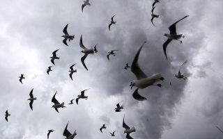 Καιρικά. Καβάλα στους ανέμους ισορροπούν οι γλάροι. Στην Νίκαια της Γαλλίας οι δυνατοί αέρηδες έφεραν σύννεφα και βροχή. REUTERS/Eric Gaillard