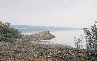 """«Το """"σύστημα"""" της Κορώνειας έχει υποστεί βίαιη ρύπανση ήδη από τη δεκαετία του '80. Η λίμνη καταρρέει εξαιτίας των μικροοργανισμών που περιέχει», εκτιμά η Μαρία Μουστάκα, καθηγήτρια του τμήματος Βιολογίας του ΑΠΘ."""