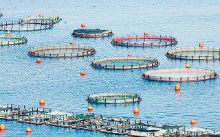 Η Ανδρομέδα Seafood αποκτά το 79,61% της «Σελόντα» και το 74,98% της «Νηρεύς», το ποσοστό δηλαδή που κατείχαν οι τέσσερις συστημικές τράπεζες. Το επόμενο διάστημα η Ανδρομέδα θα απευθύνει υποχρεωτική δημόσια πρόταση για την απόκτηση του συνόλου των μετοχών των δύο εταιρειών.
